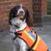 Technical Rescue Unit Image - Search and Rescue Dog